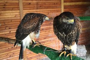 falconry_and_raptor_club-09.jpg